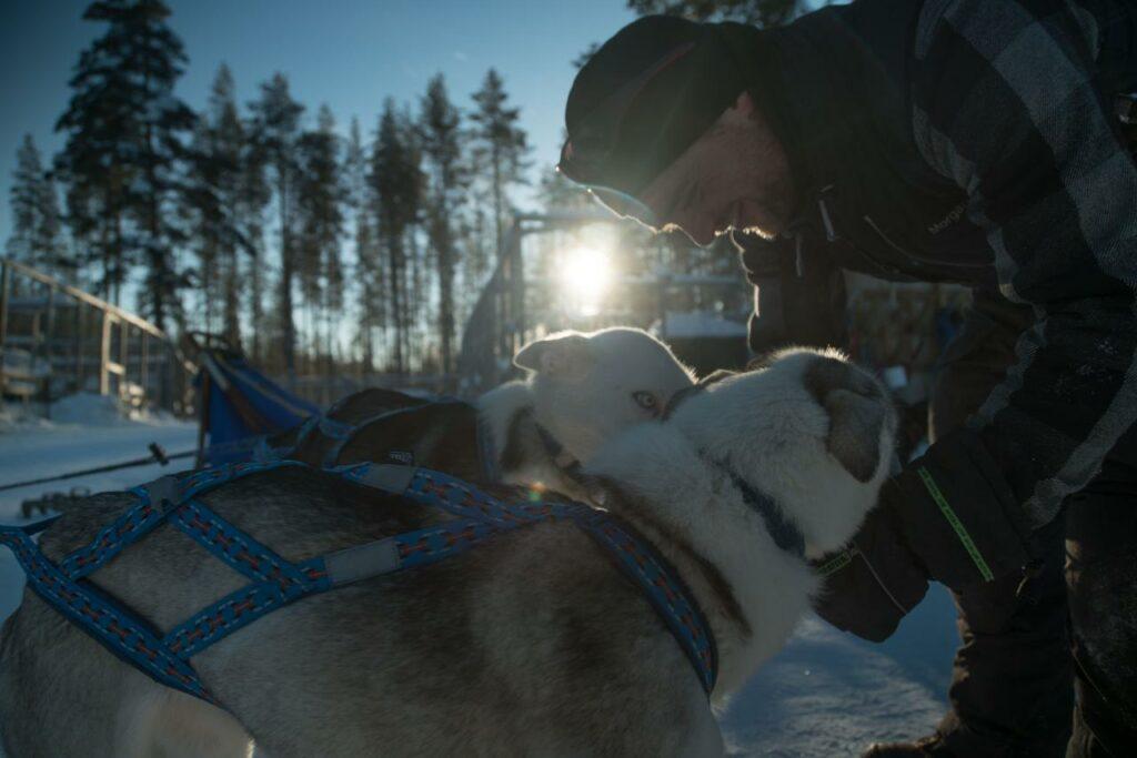 Lapland Husky Tocht, husky knuffelen / laplandstuga & tours